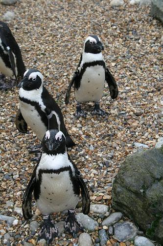 Penguinologist
